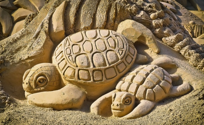 Don't be a turtle! Thoughts about Christians and the 2020 election